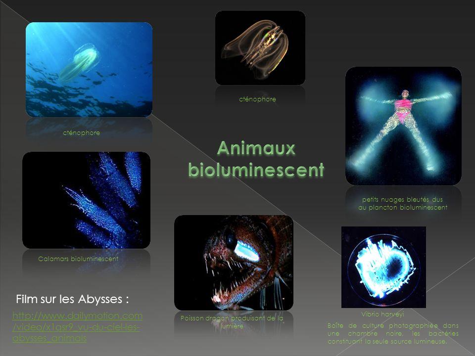 Animaux bioluminescent