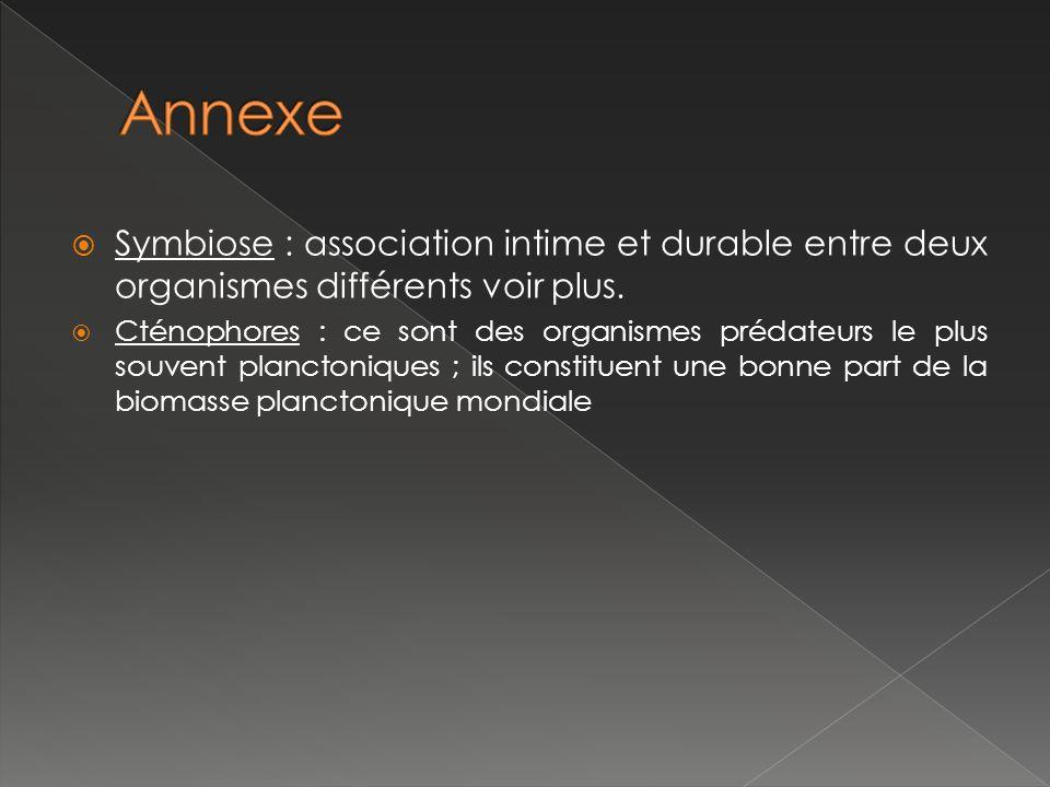 Annexe Symbiose : association intime et durable entre deux organismes différents voir plus.