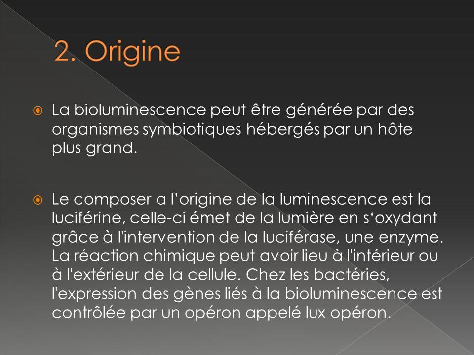 2. Origine La bioluminescence peut être générée par des organismes symbiotiques hébergés par un hôte plus grand.