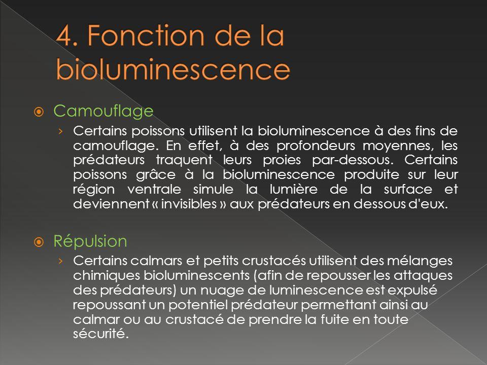 4. Fonction de la bioluminescence