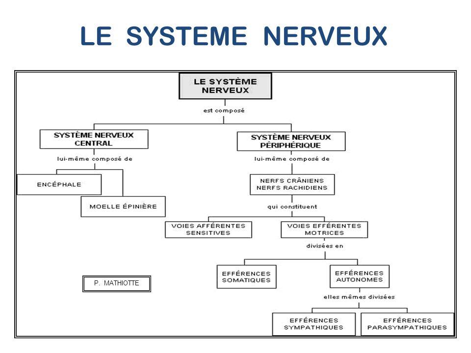 LE SYSTEME NERVEUX P. MATHIOTTE