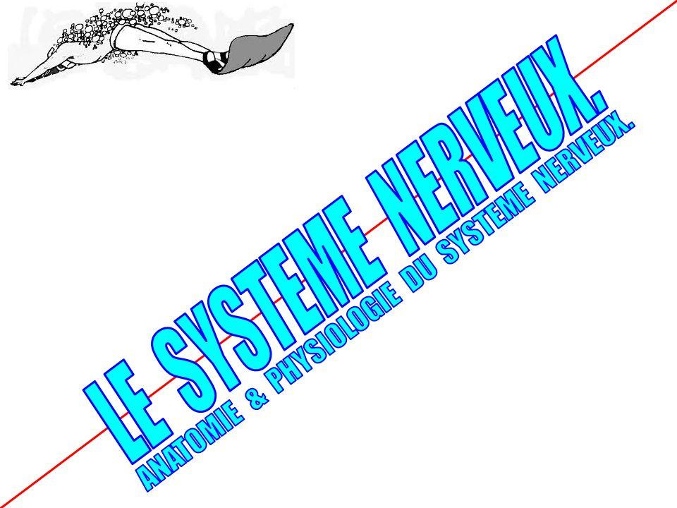 ANATOMIE & PHYSIOLOGIE DU SYSTEME NERVEUX.