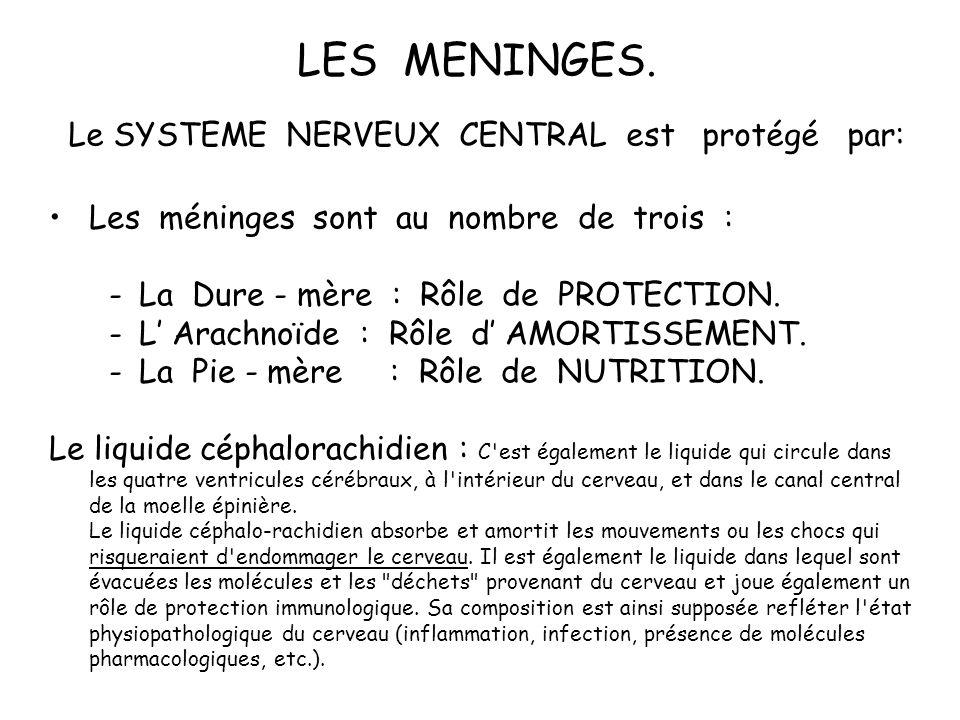 Le SYSTEME NERVEUX CENTRAL est protégé par: