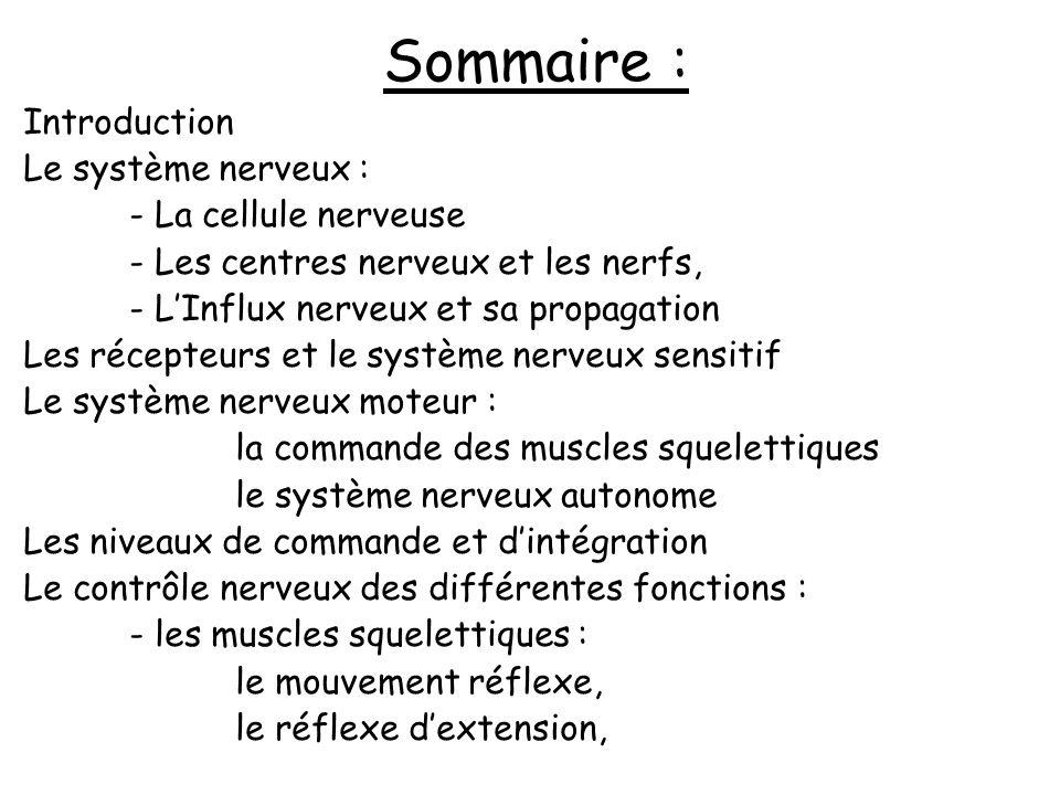 Sommaire : Introduction Le système nerveux : - La cellule nerveuse