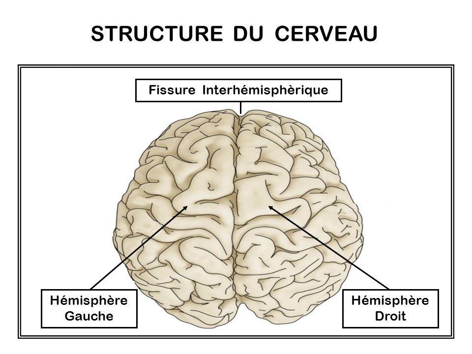 Fissure Interhémisphèrique