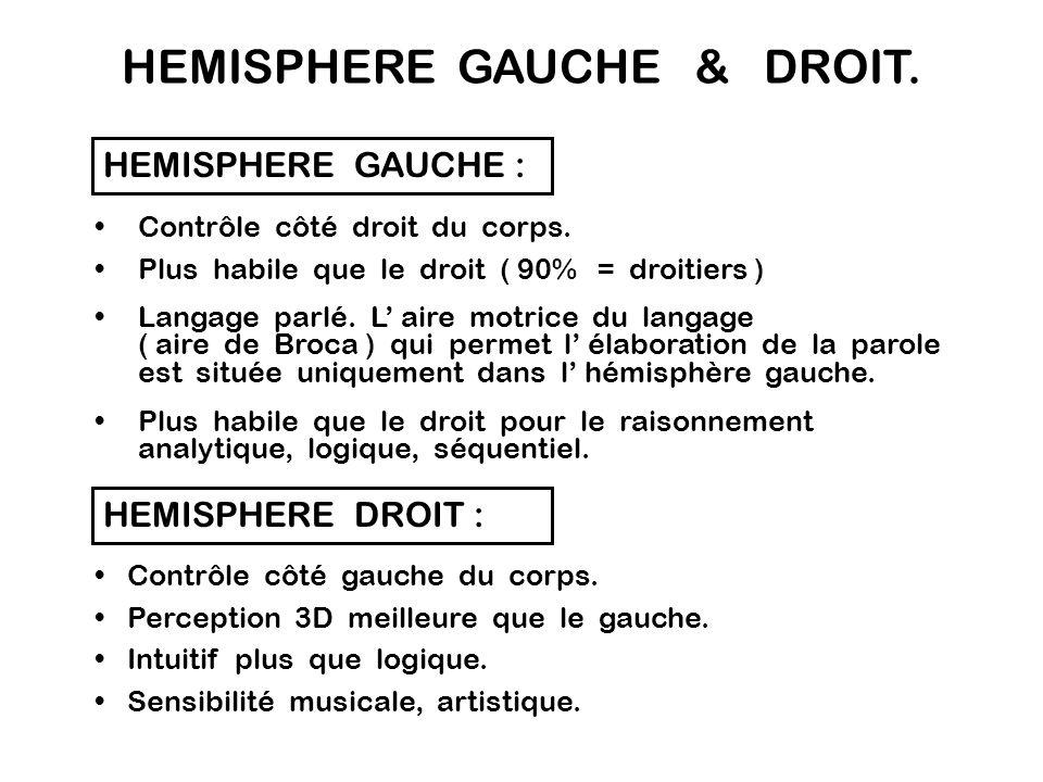 HEMISPHERE GAUCHE & DROIT.