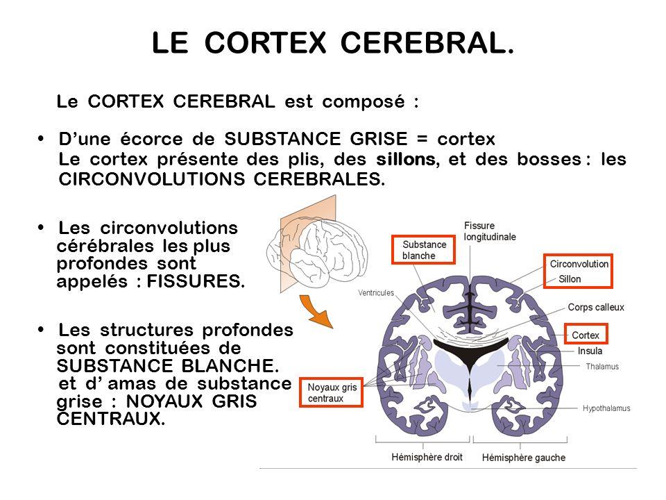 LE CORTEX CEREBRAL. Le CORTEX CEREBRAL est composé :