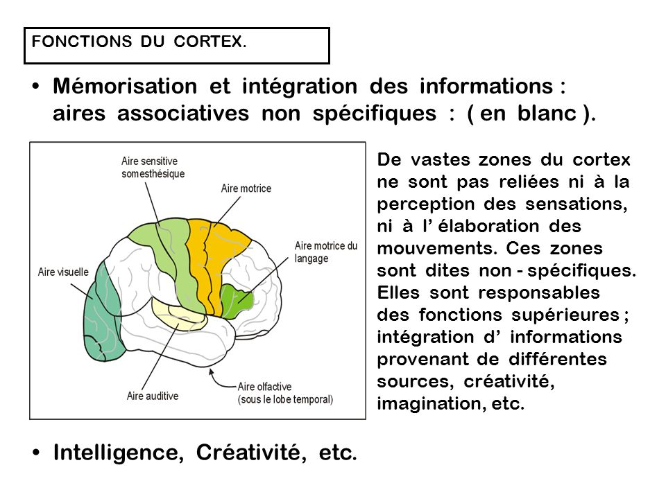 Intelligence, Créativité, etc.