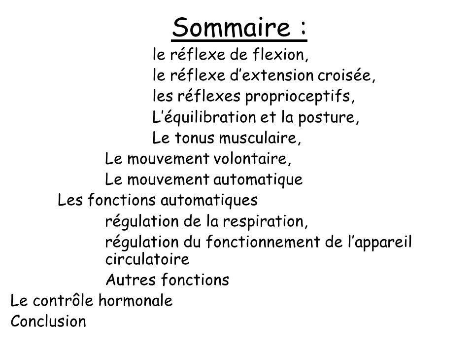 Sommaire : le réflexe de flexion, le réflexe d'extension croisée,