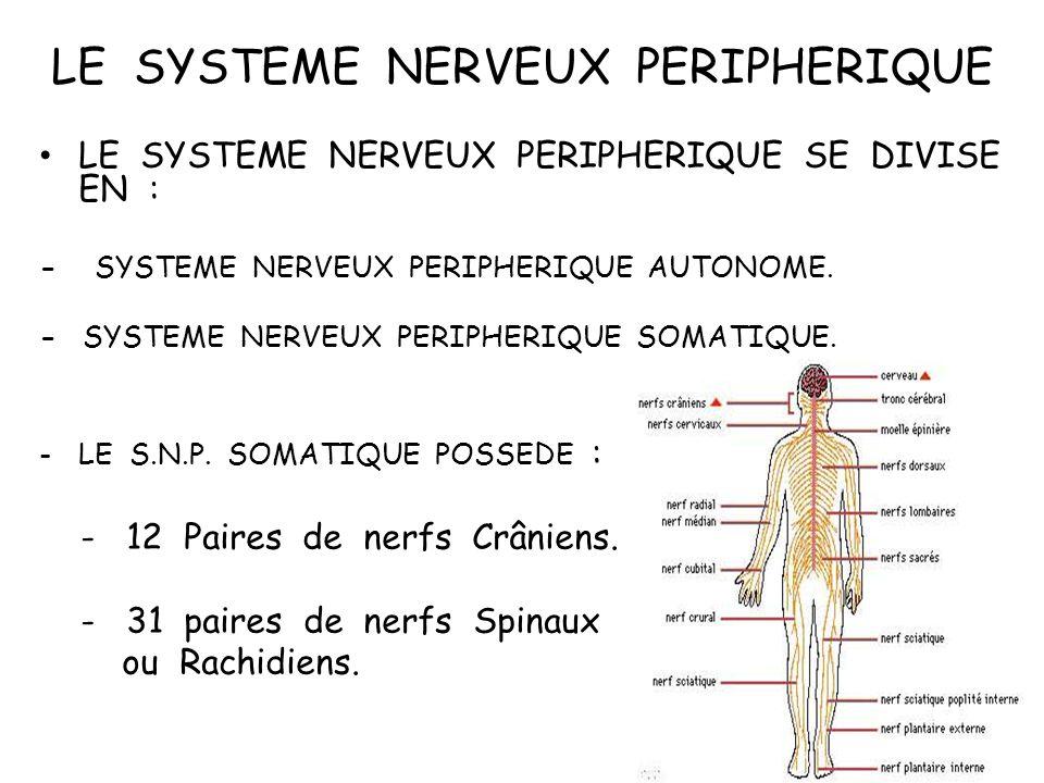 LE SYSTEME NERVEUX PERIPHERIQUE