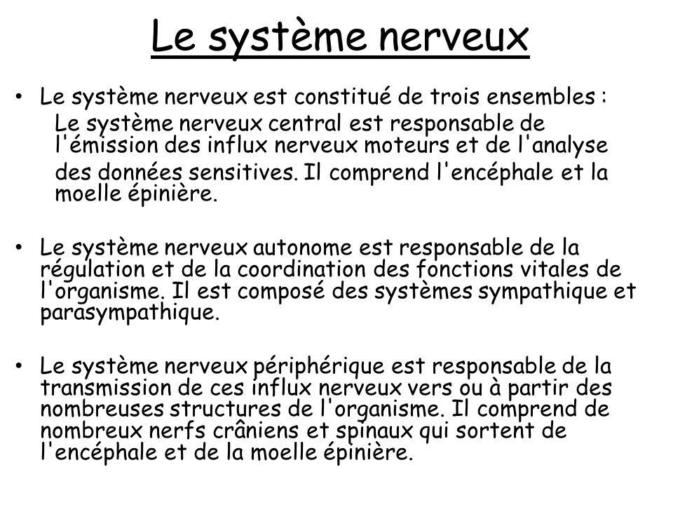 Le système nerveux Le système nerveux est constitué de trois ensembles :