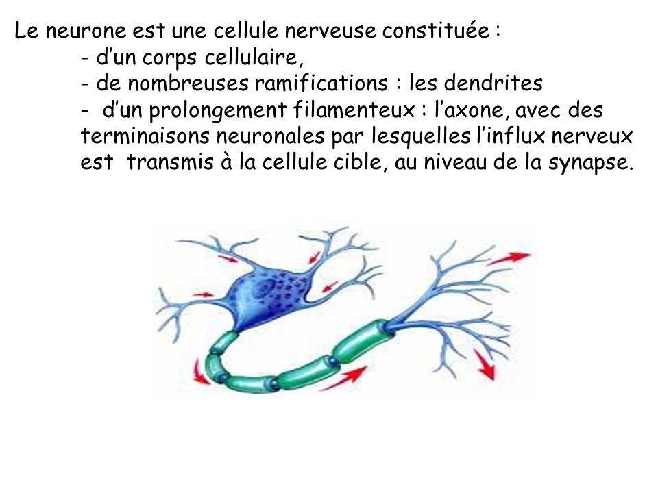 Le neurone est une cellule nerveuse constituée :