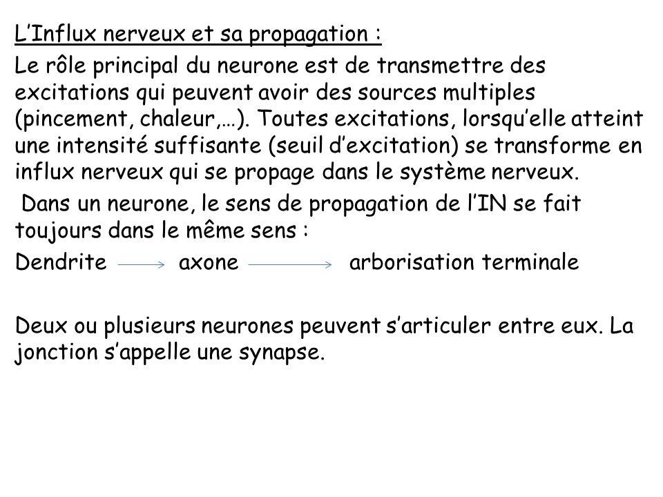 L'Influx nerveux et sa propagation : Le rôle principal du neurone est de transmettre des excitations qui peuvent avoir des sources multiples (pincement, chaleur,…).