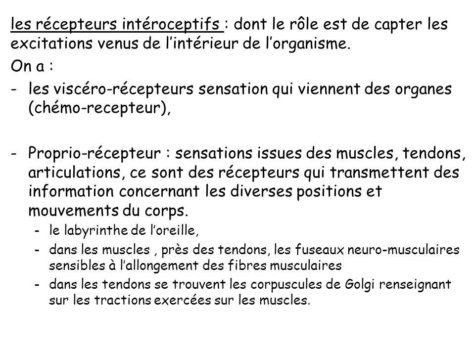 les récepteurs intéroceptifs : dont le rôle est de capter les excitations venus de l'intérieur de l'organisme.