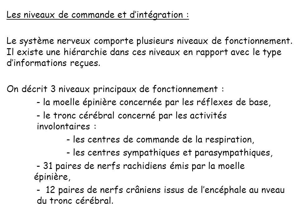 Les niveaux de commande et d'intégration : Le système nerveux comporte plusieurs niveaux de fonctionnement.