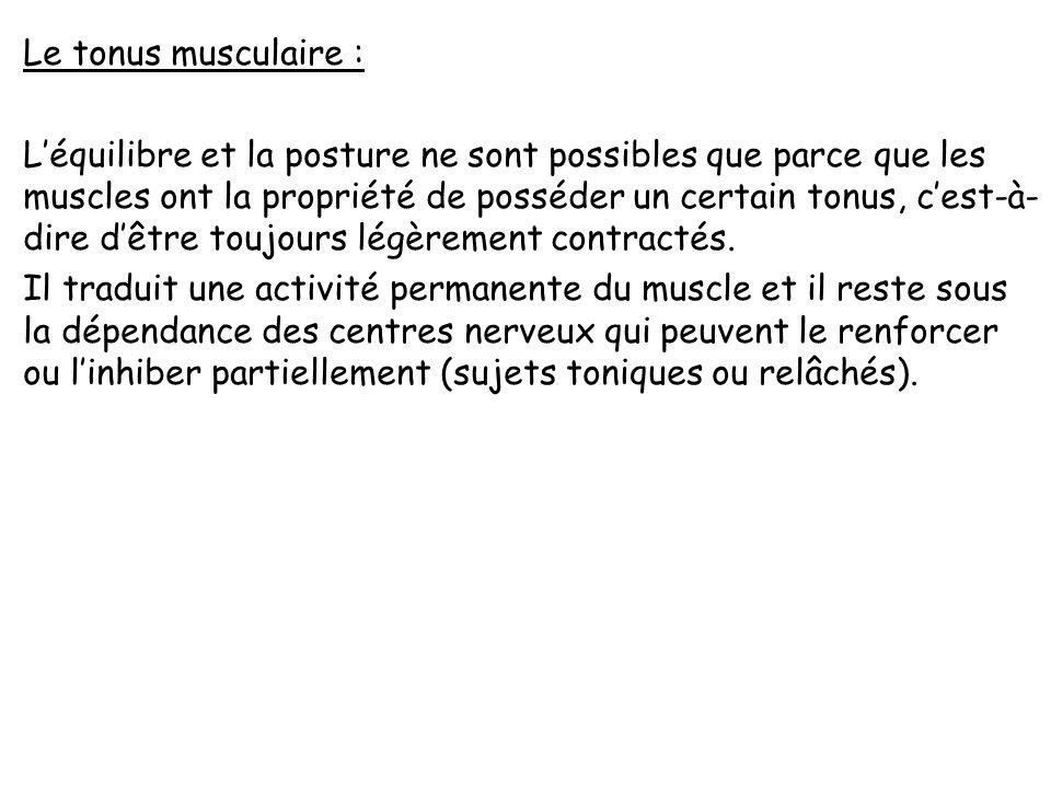 Le tonus musculaire : L'équilibre et la posture ne sont possibles que parce que les muscles ont la propriété de posséder un certain tonus, c'est-à-dire d'être toujours légèrement contractés.