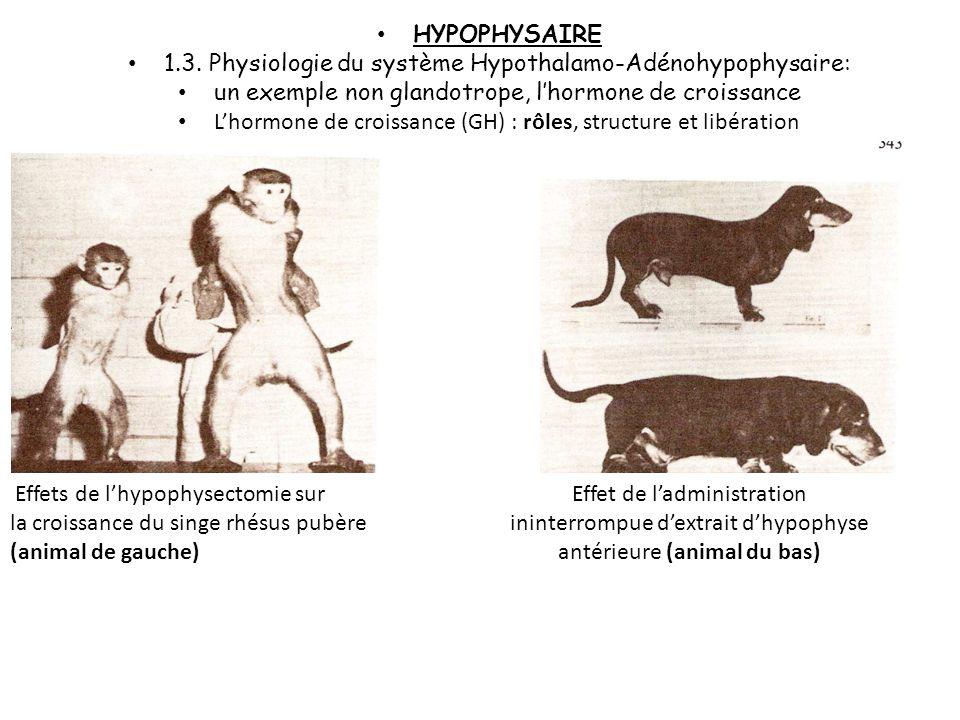 1.3. Physiologie du système Hypothalamo-Adénohypophysaire: