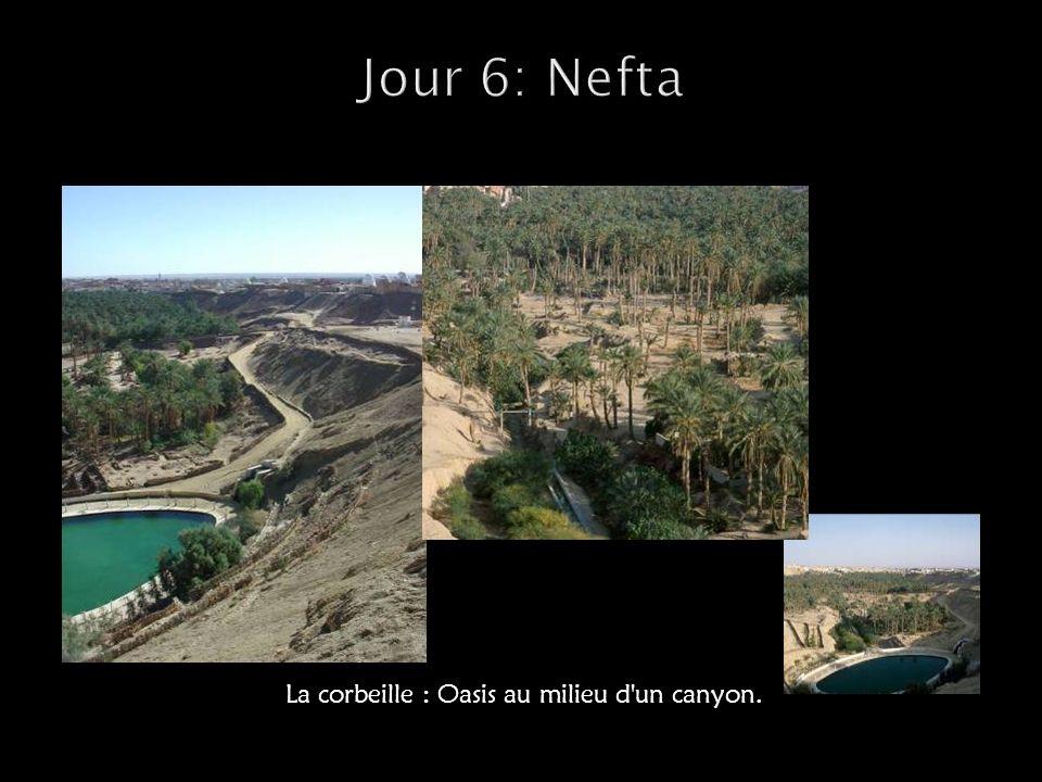 Jour 6: Nefta La corbeille : Oasis au milieu d un canyon.