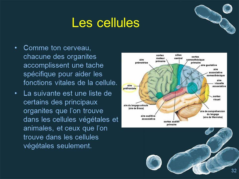 Les cellules Comme ton cerveau, chacune des organites accomplissent une tache spécifique pour aider les fonctions vitales de la cellule.