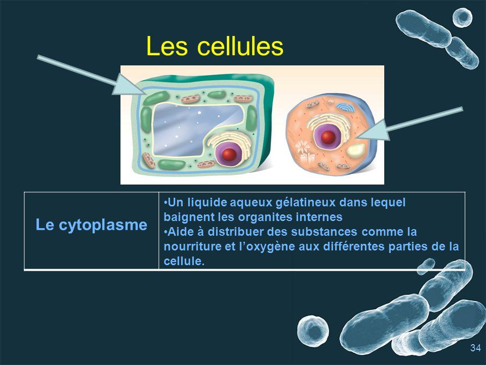 Les cellules Le cytoplasme