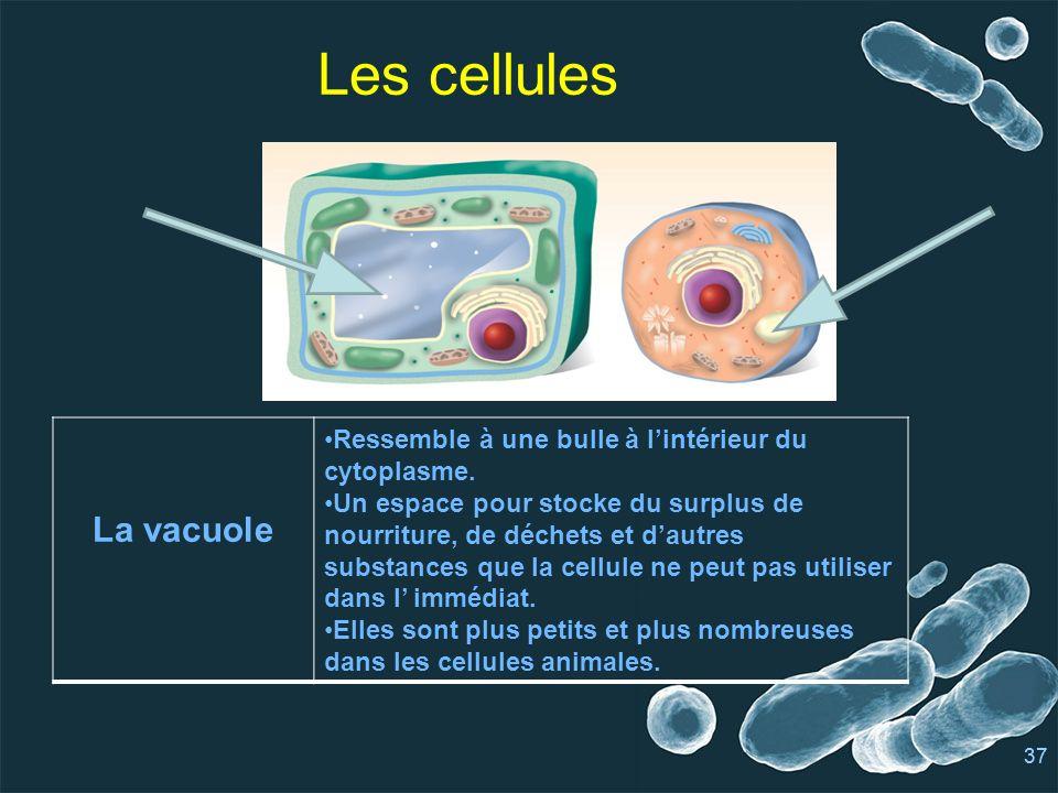 Les cellules La vacuole
