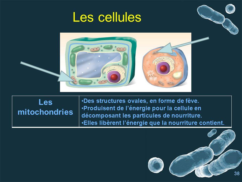 Les cellules Les mitochondries
