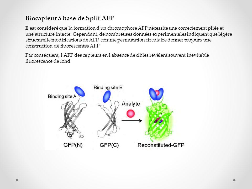 Biocapteur à base de Split AFP