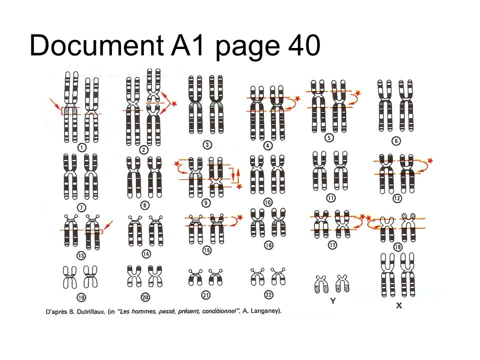 Document A1 page 40