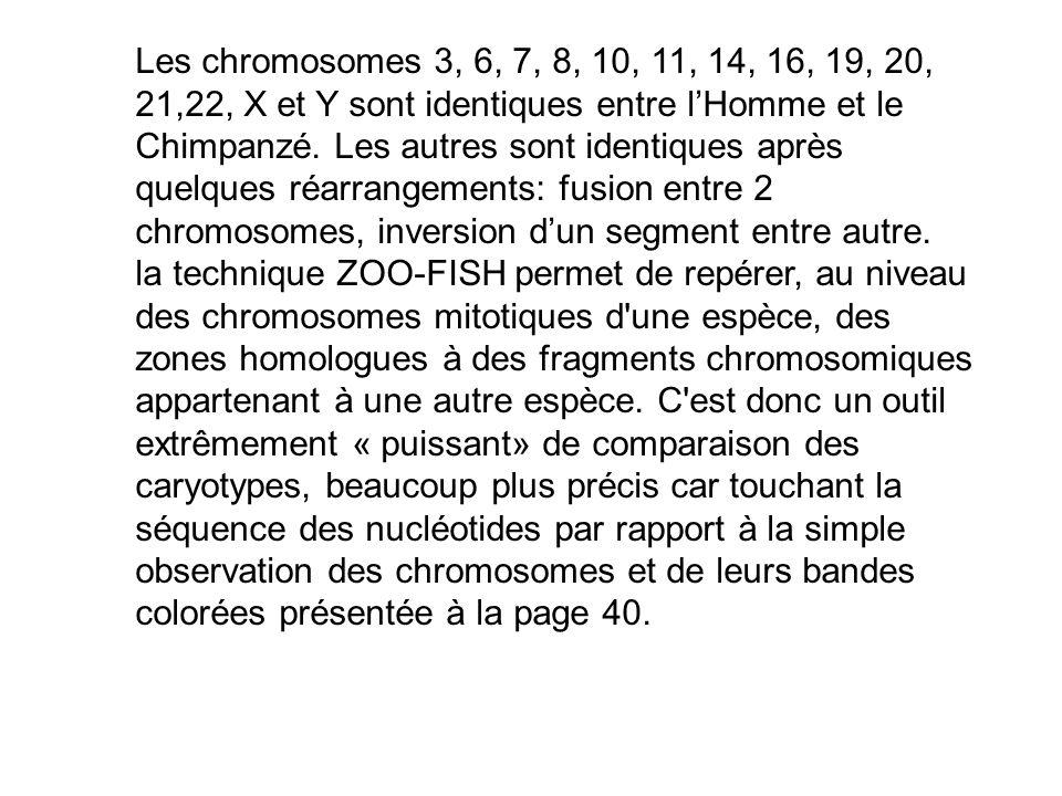 Les chromosomes 3, 6, 7, 8, 10, 11, 14, 16, 19, 20, 21,22, X et Y sont identiques entre l'Homme et le Chimpanzé. Les autres sont identiques après quelques réarrangements: fusion entre 2 chromosomes, inversion d'un segment entre autre.