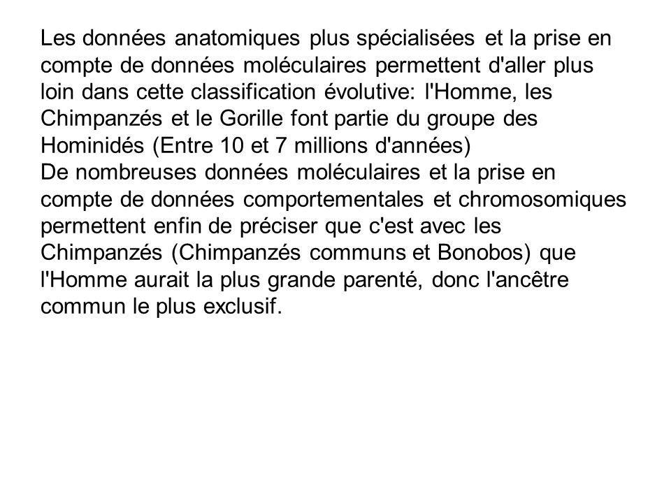 Les données anatomiques plus spécialisées et la prise en compte de données moléculaires permettent d aller plus loin dans cette classification évolutive: l Homme, les Chimpanzés et le Gorille font partie du groupe des Hominidés (Entre 10 et 7 millions d années) De nombreuses données moléculaires et la prise en compte de données comportementales et chromosomiques permettent enfin de préciser que c est avec les Chimpanzés (Chimpanzés communs et Bonobos) que l Homme aurait la plus grande parenté, donc l ancêtre commun le plus exclusif.