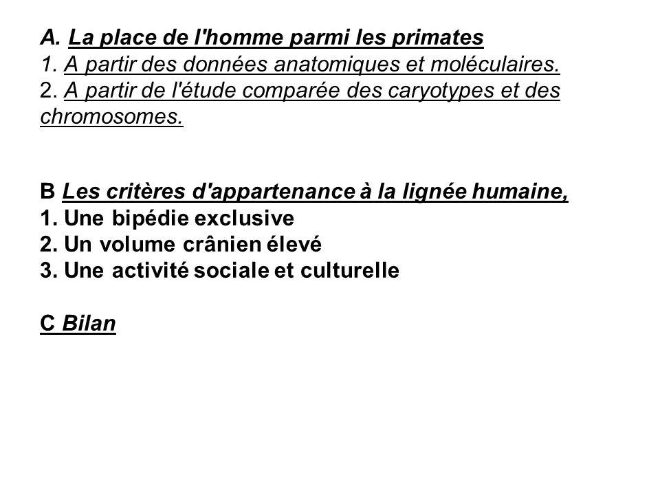 A. La place de l homme parmi les primates 1