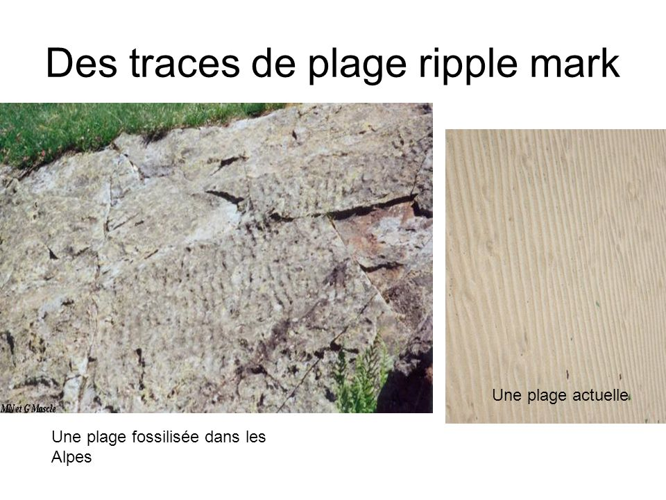 Des traces de plage ripple mark