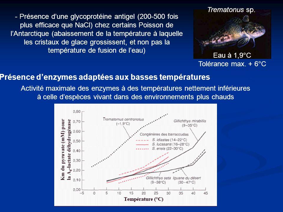 Présence d'enzymes adaptées aux basses températures
