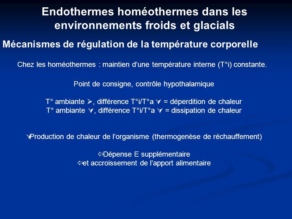 Endothermes homéothermes dans les environnements froids et glacials