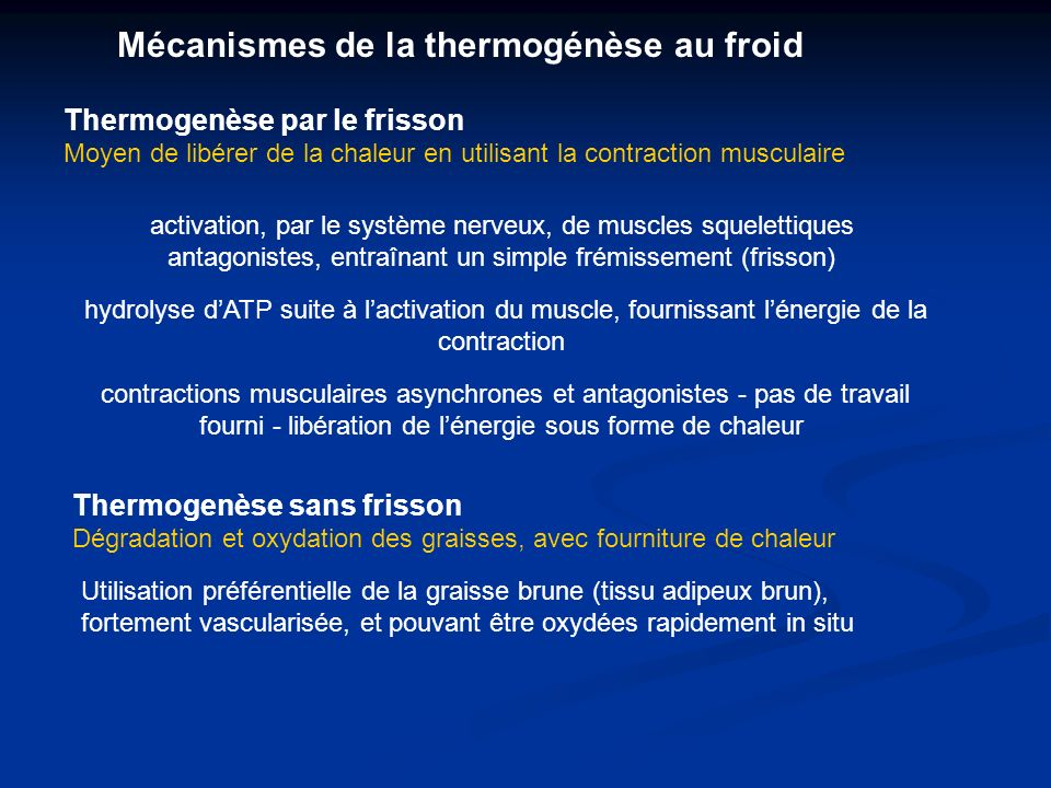 Mécanismes de la thermogénèse au froid