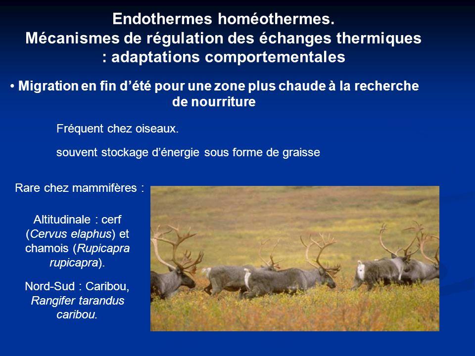 Endothermes homéothermes.