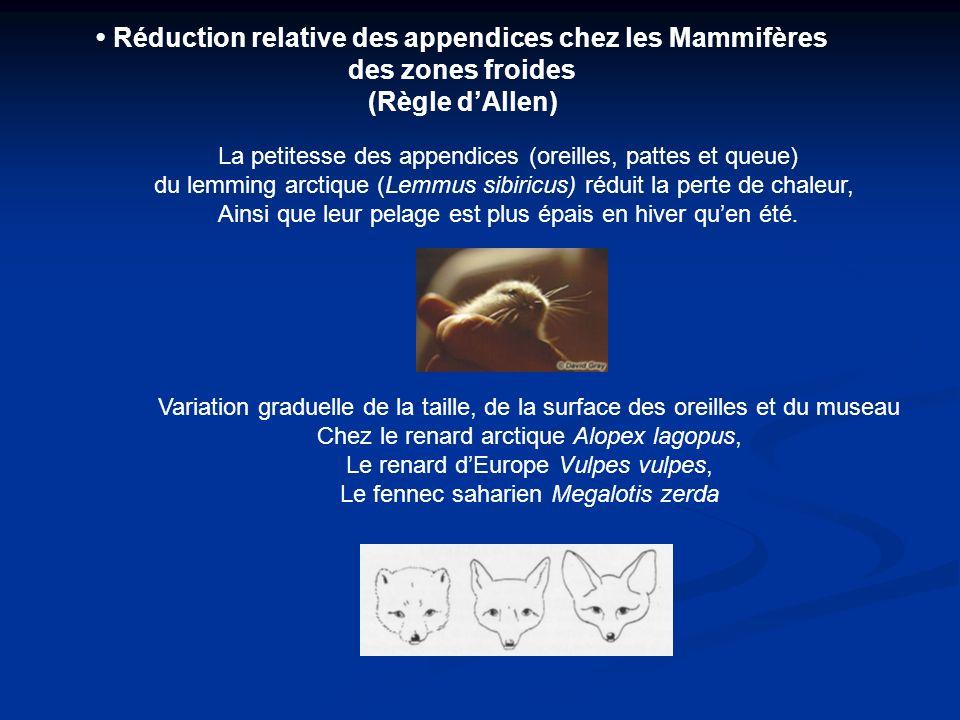 • Réduction relative des appendices chez les Mammifères