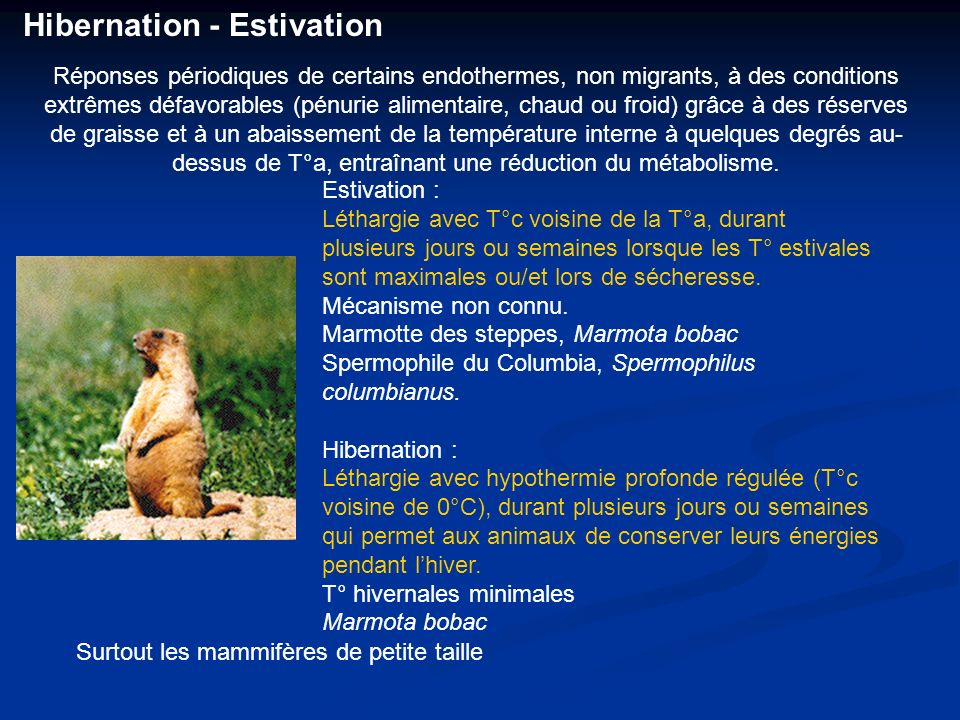 Hibernation - Estivation