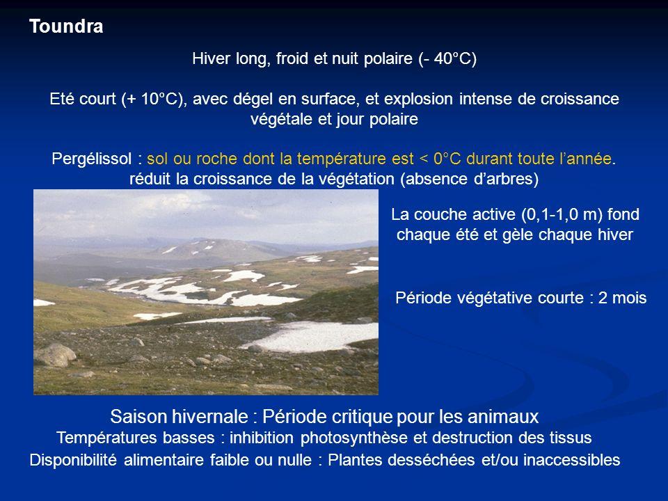 Saison hivernale : Période critique pour les animaux