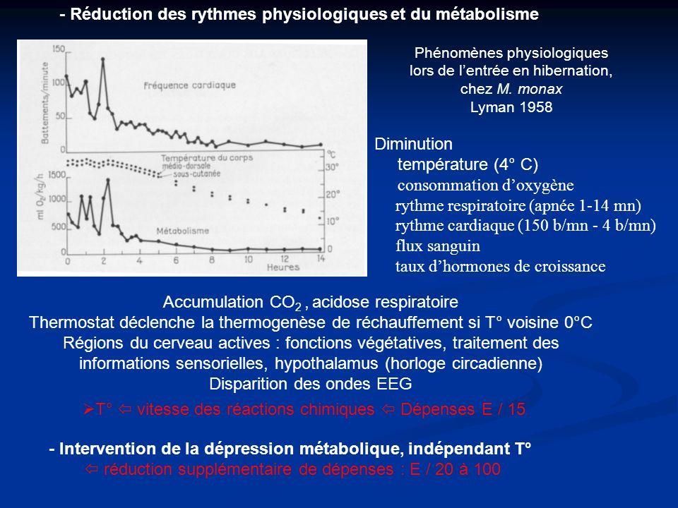 - Réduction des rythmes physiologiques et du métabolisme