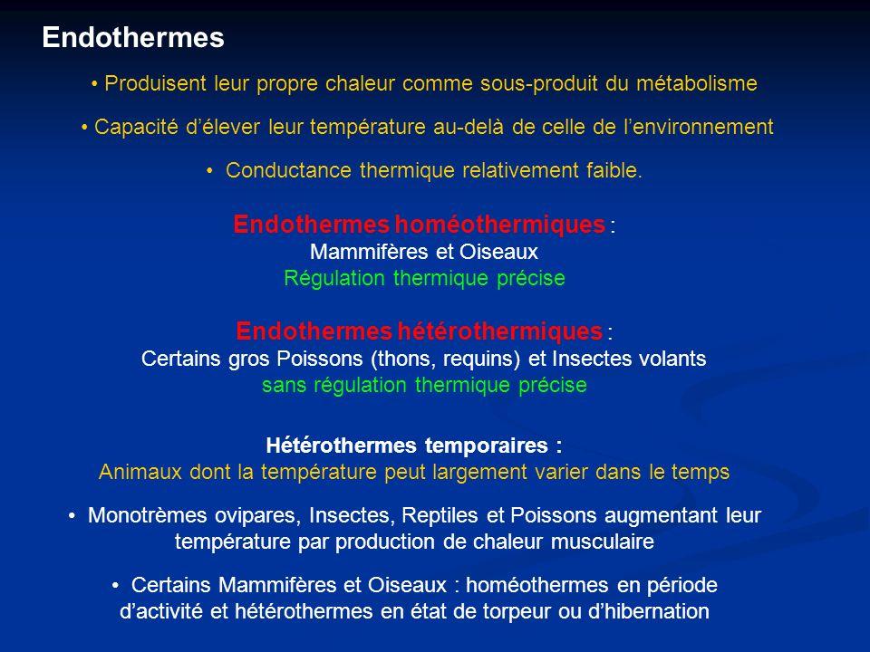 Hétérothermes temporaires :