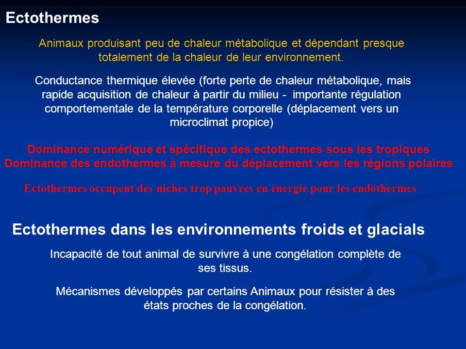 Ectothermes Ectothermes dans les environnements froids et glacials