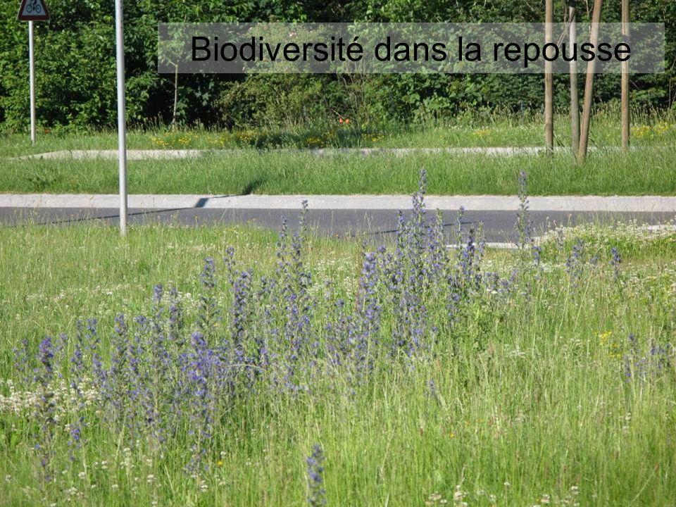 Biodiversité dans la repousse