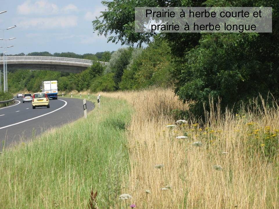 Prairie à herbe courte et prairie à herbe longue