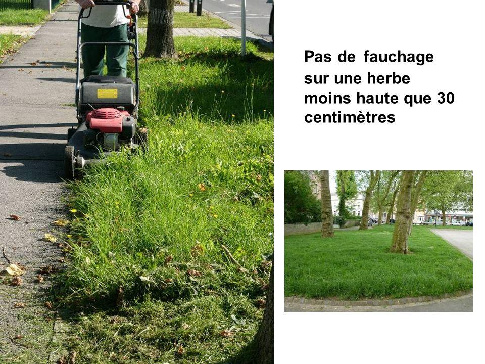 Pas de fauchage sur une herbe moins haute que 30 centimètres