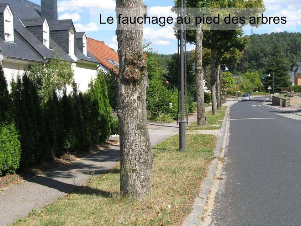 Le fauchage au pied des arbres