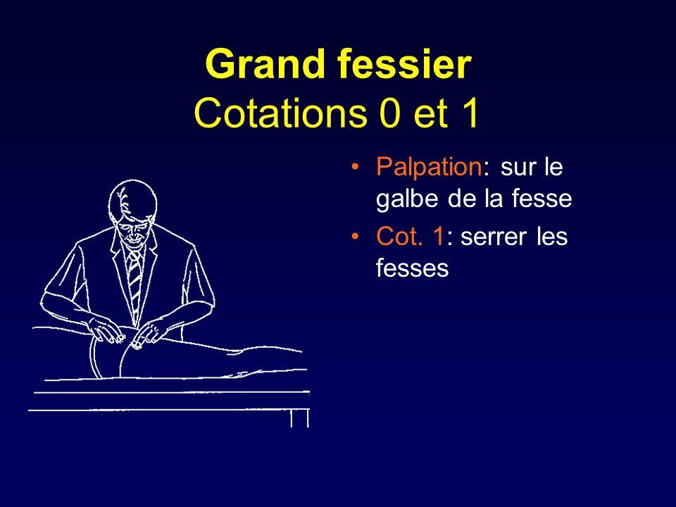 Grand fessier Cotations 0 et 1