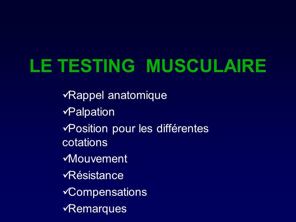 LE TESTING MUSCULAIRE Rappel anatomique Palpation
