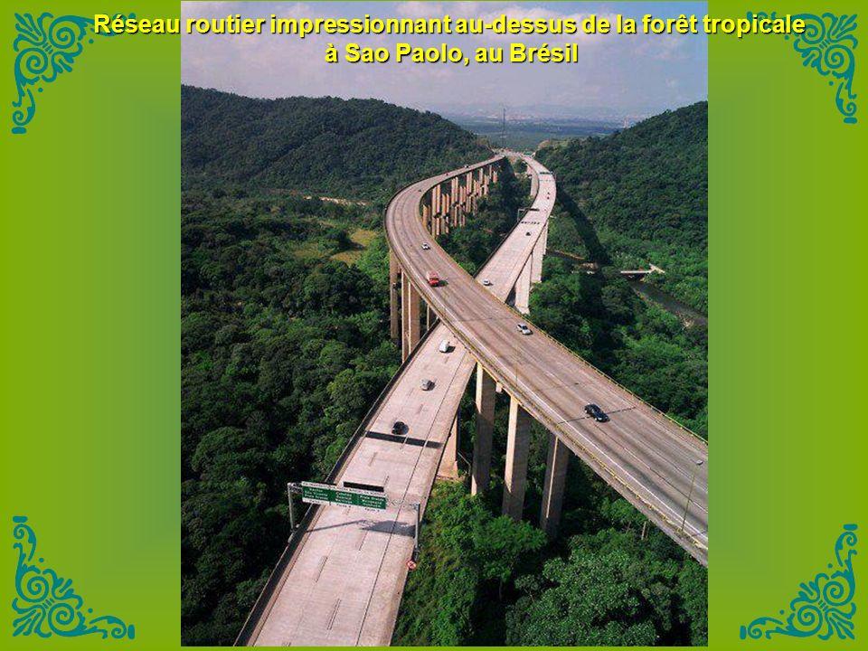 Réseau routier impressionnant au-dessus de la forêt tropicale