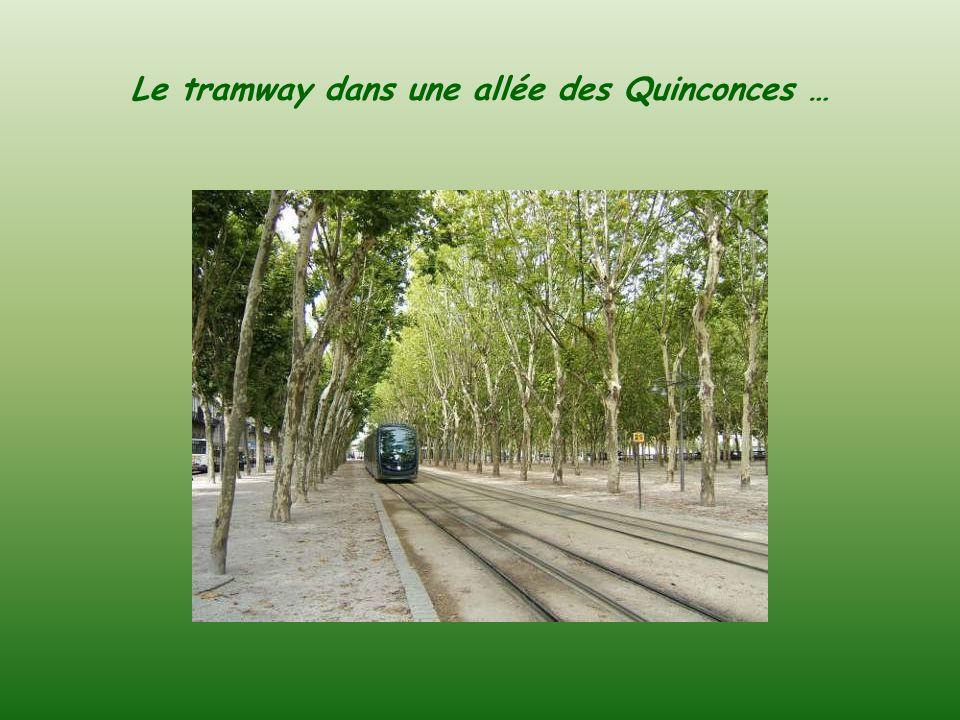 Le tramway dans une allée des Quinconces …